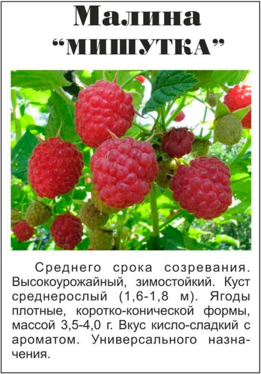 Журавлик малина: описание сорта, правила выращивания и советы по уходу