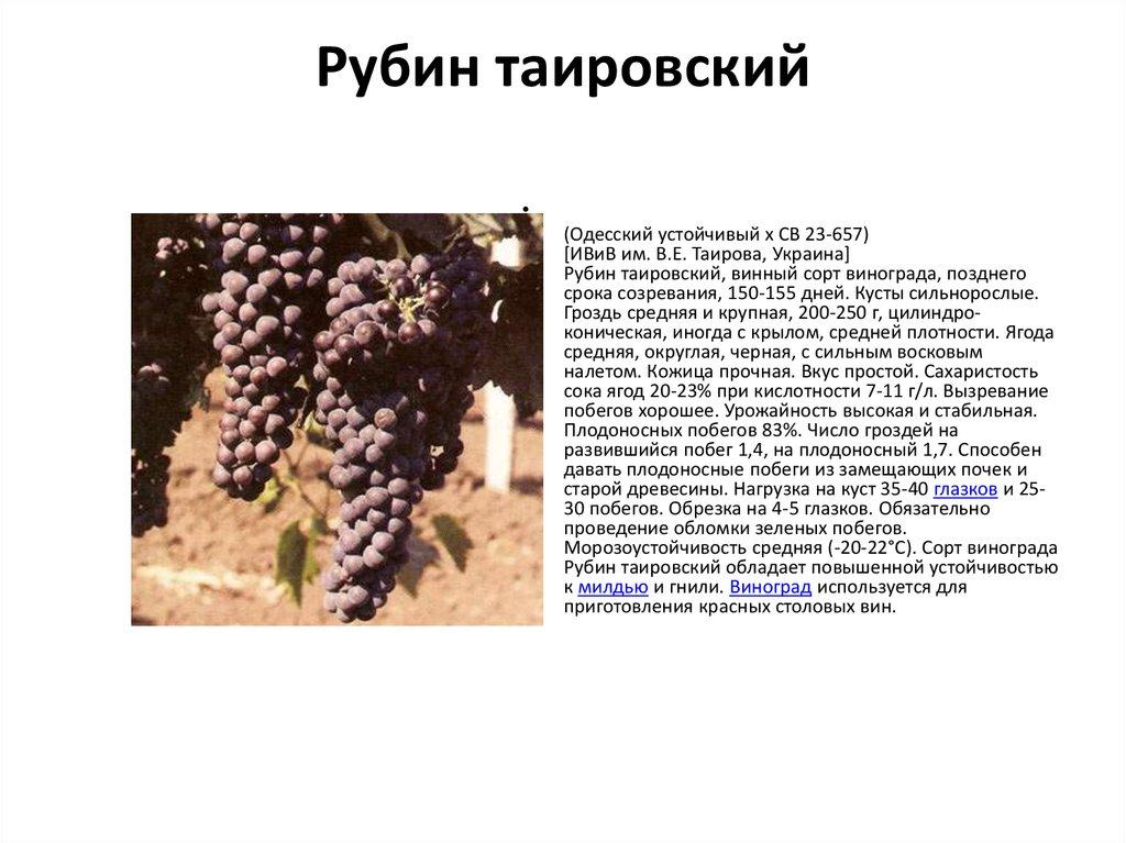 Сорт винограда «ливия»
