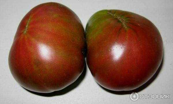 Поль робсон томат. крепкий и устойчивый сорт — томат поль робсон: полное описание помидоров и их характеристики | зелёный сад