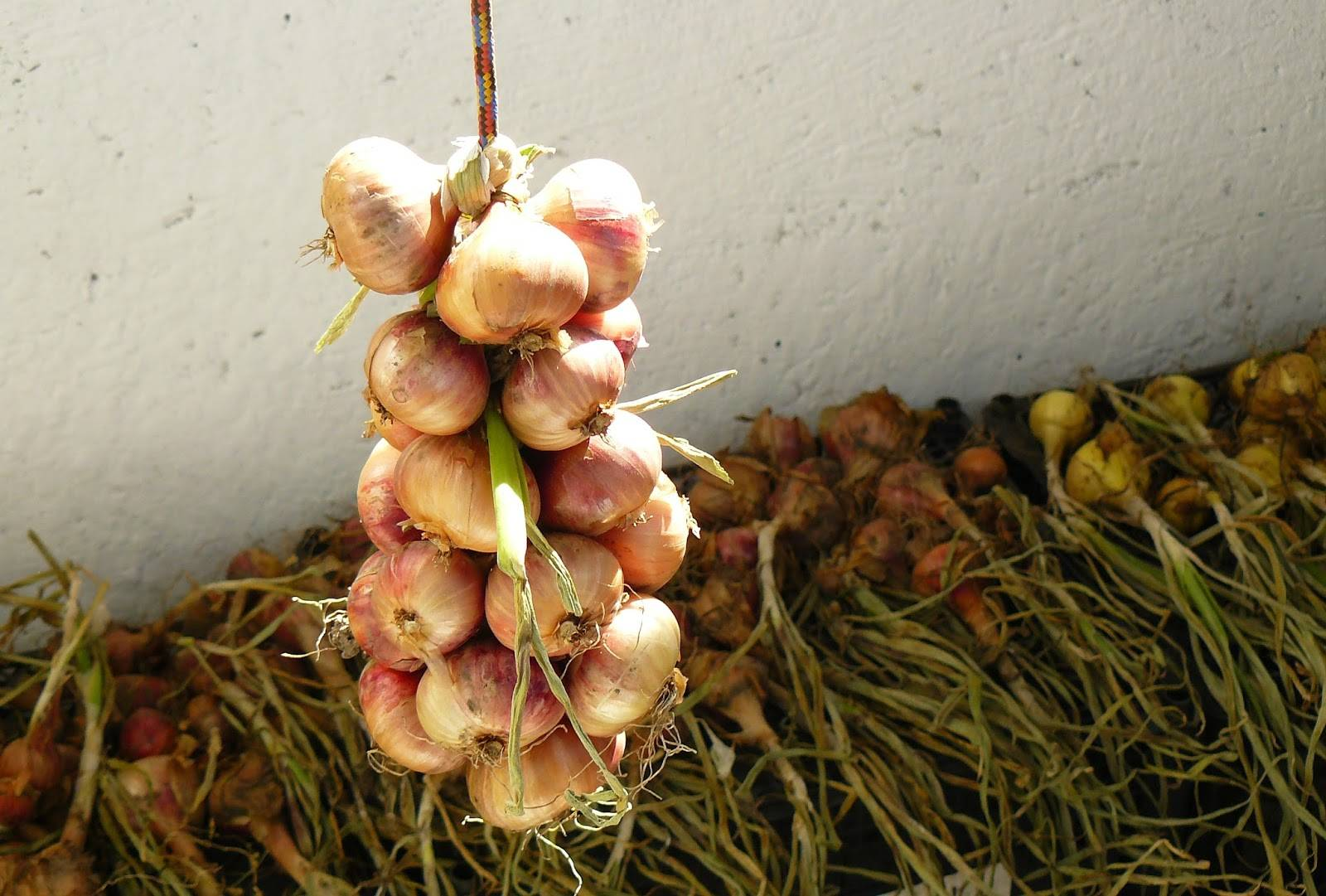 Как хранить чеснок на зиму в домашних условиях чтобы не высох