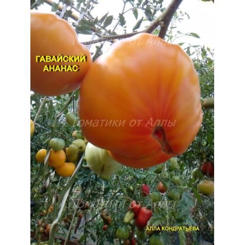 Любимец слодкоежек — томат черный ананас: подробная характеристика сорта