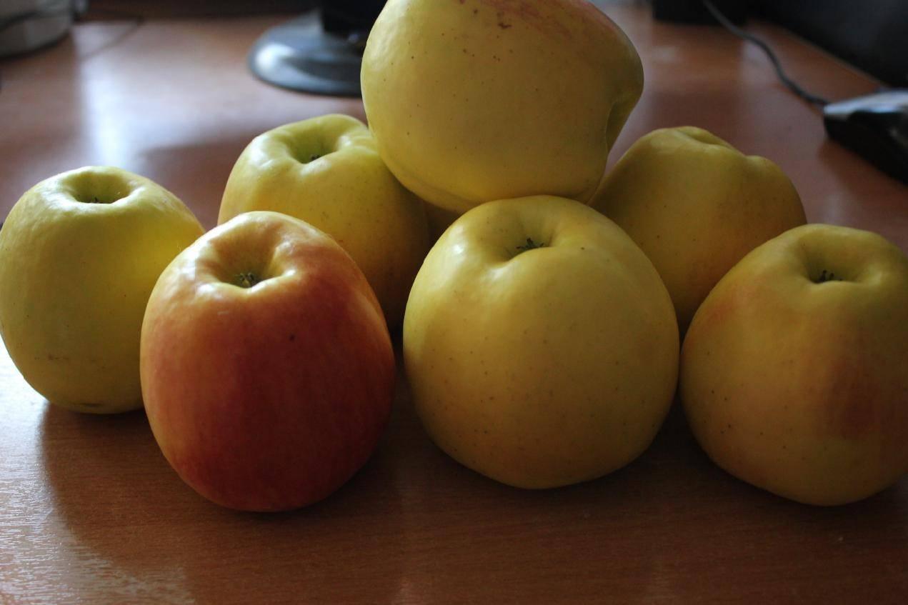 Яблоня приземленное: особенности сорта и ухода - сорта яблонь: полный каталог