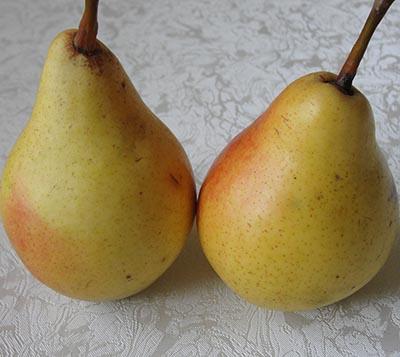 Сорт груши «любимица клаппа» ('clapp's favorite'): характеристика, агротехника выращивания
