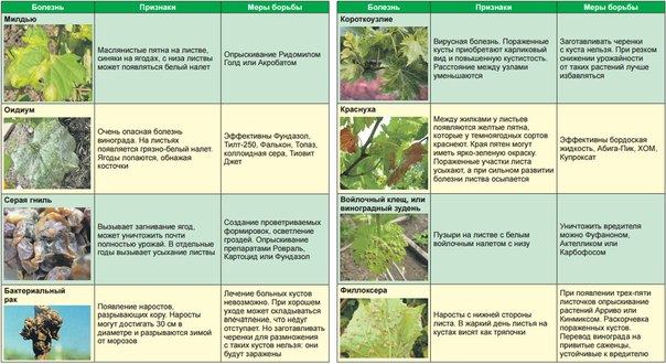 Борьба с вредителями и болезнями | fermer.ru - фермер.ру - главный фермерский портал - все о бизнесе в сельском хозяйстве. форум фермеров.