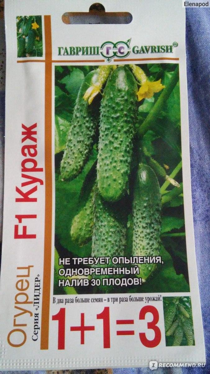 Огурцы кураж отзывы фото урожайность характеристика и отзывы