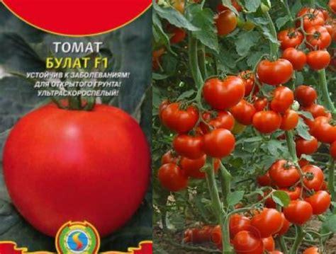 Лучшие сорта томатов: описание, характеристика, фото