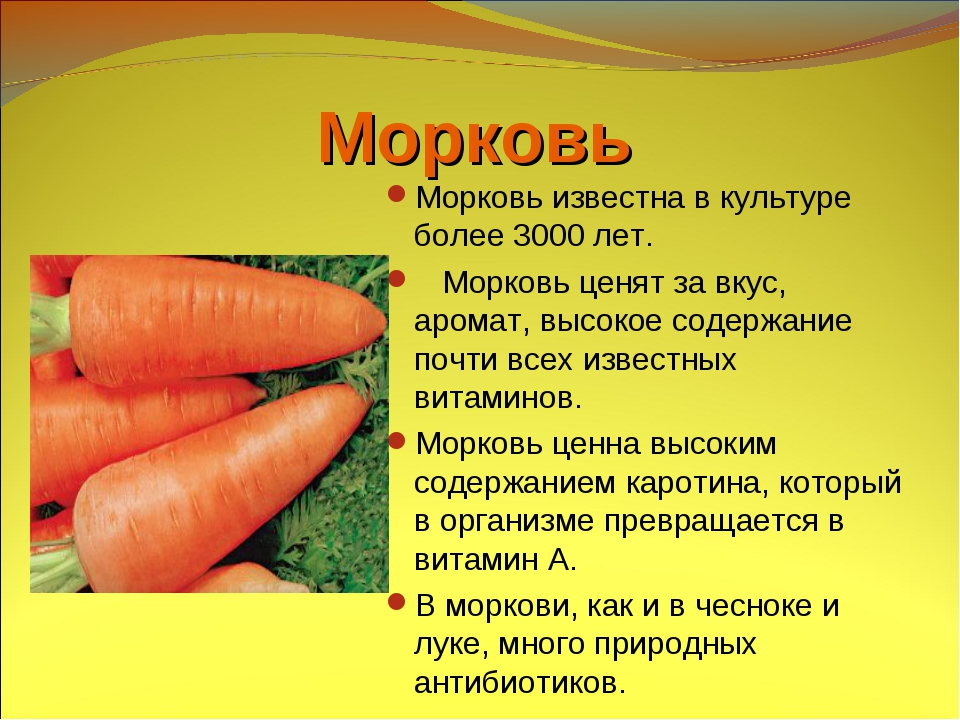 Морковь – описание, виды и сорта, посадка и уход, фото.