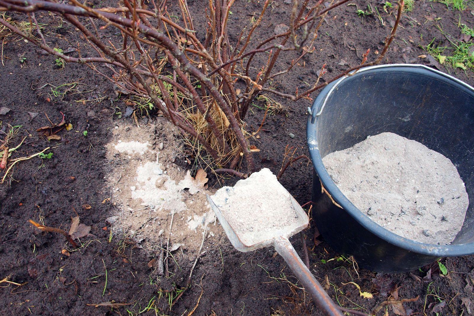 Древесная зола как удобрение для огорода как применять