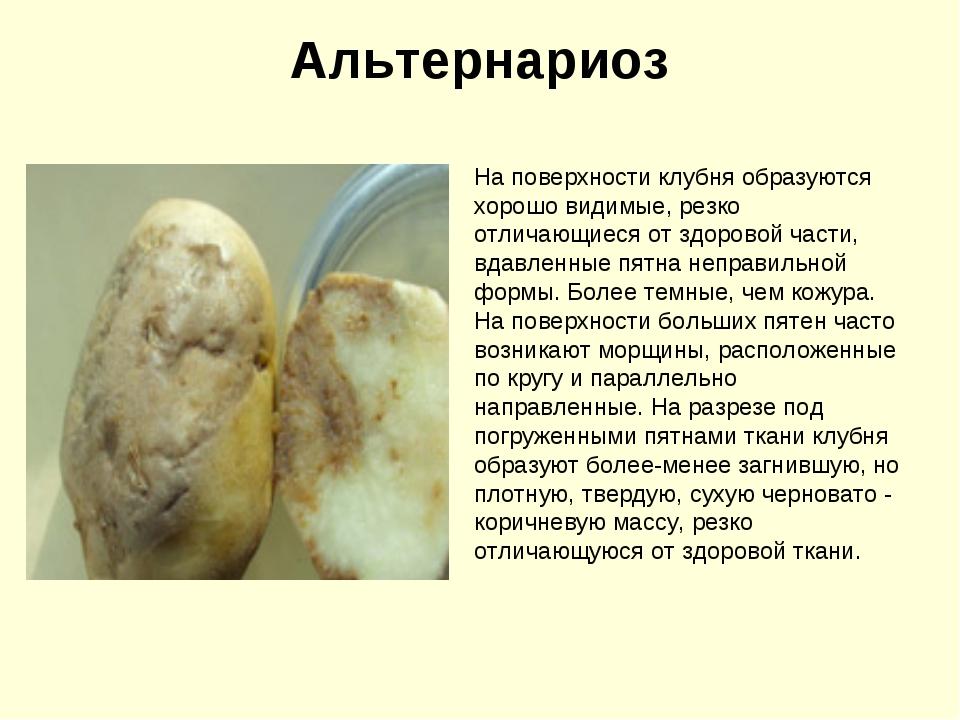 Альтернариоз картофеля: описание, лечение и профилактика