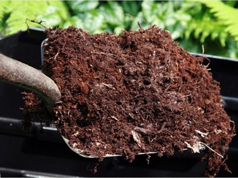 Использование торфа в качестве удобрения для огорода