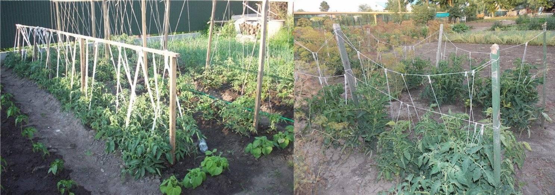 ✅ как сделать шпалеры (подпорки) для томатов в открытом грунте своими руками - tehnomir32.ru