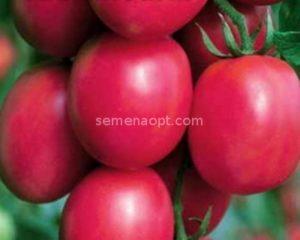 Томат сахарная слива малиновая: описание сорта и уход с фото