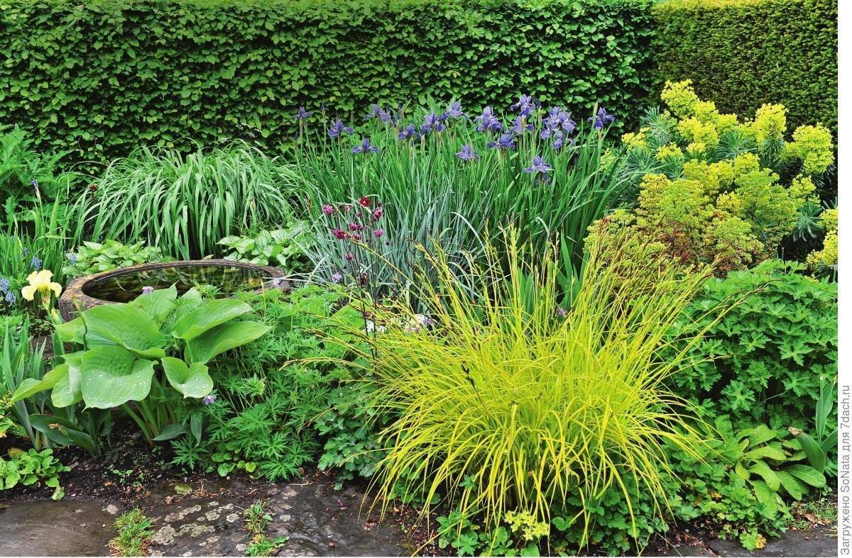 Ирис болотный: посадка и уход, особенности растения