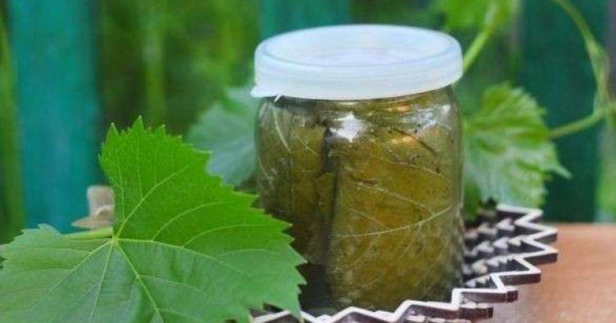 Виноградные листья на зиму: 1 рецепт с фото пошагово. как заготовить виноградные листья на зиму?