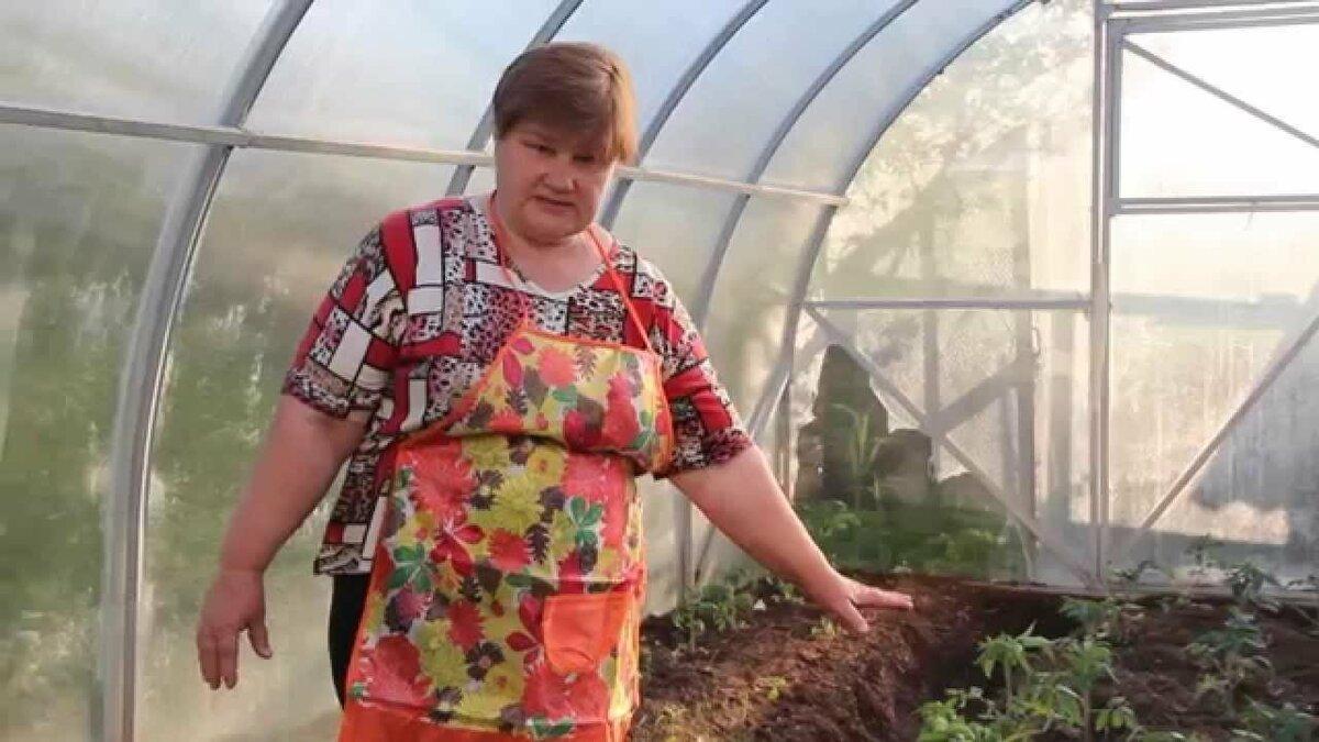 Как посадить томаты в улитку на рассаду и вырастить