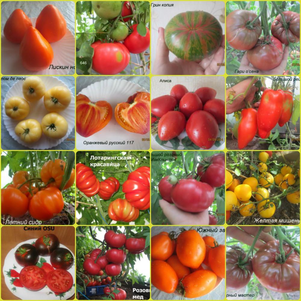 Редкие сорта томатов   tomatland.ru