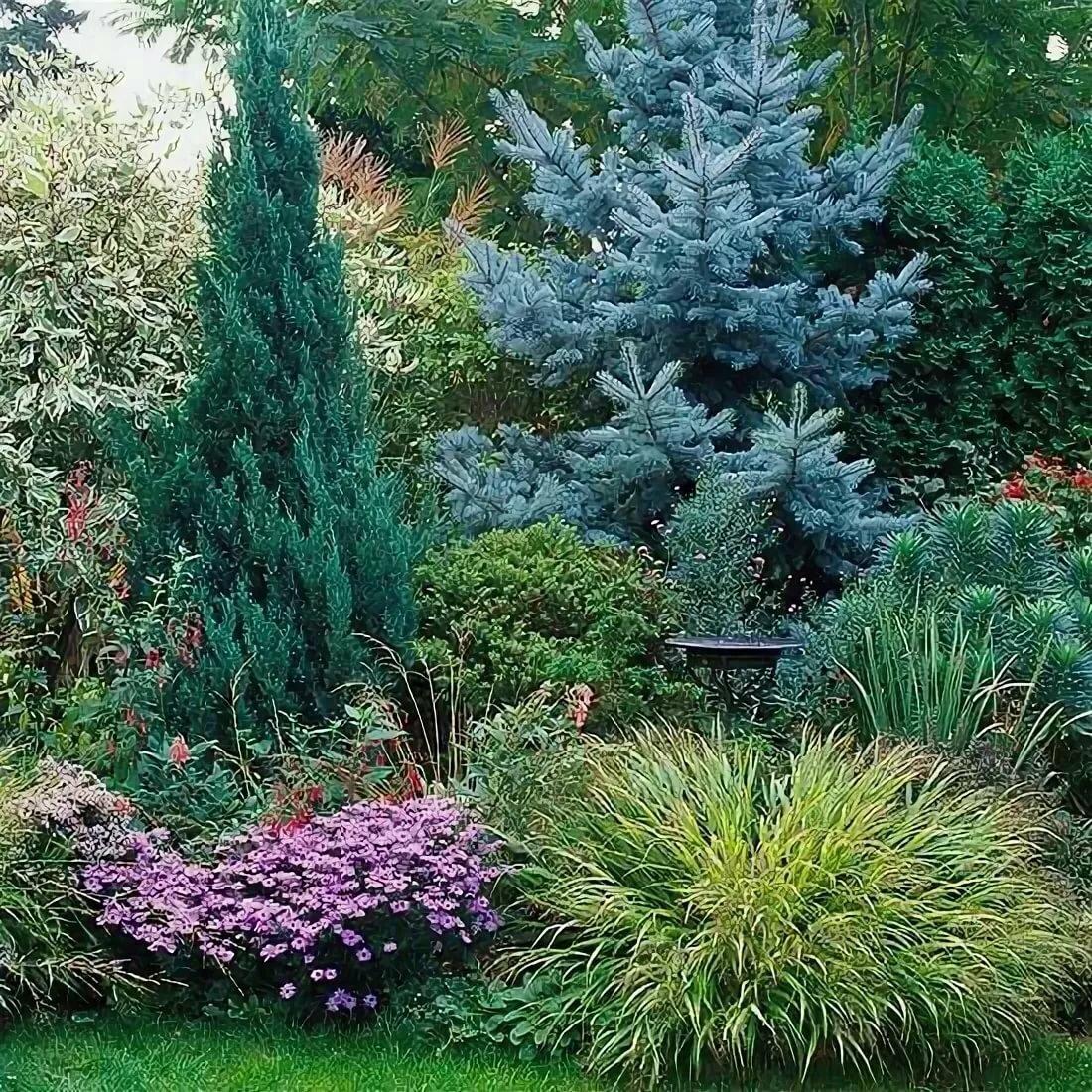 Хвойники в саду: виды, уход, применение в ландшафтном дизайне, фото
