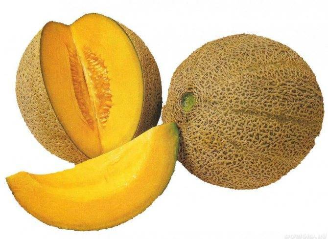 Дыня ананас: описание и характеристика гибрида