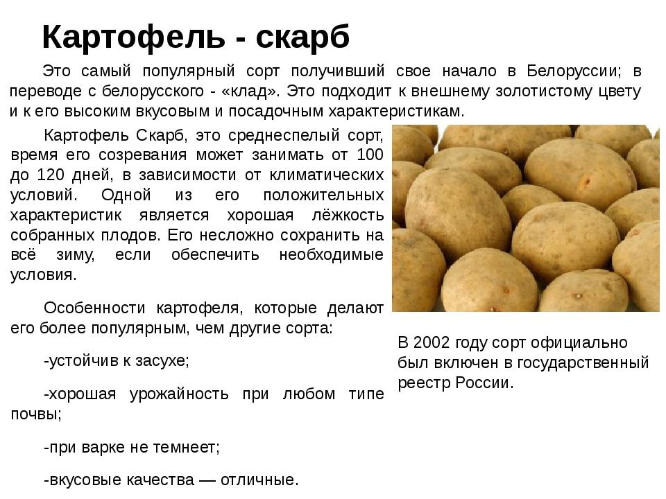 Картофель елизавета: описание сорта, характеристика, правила выращивания, фото