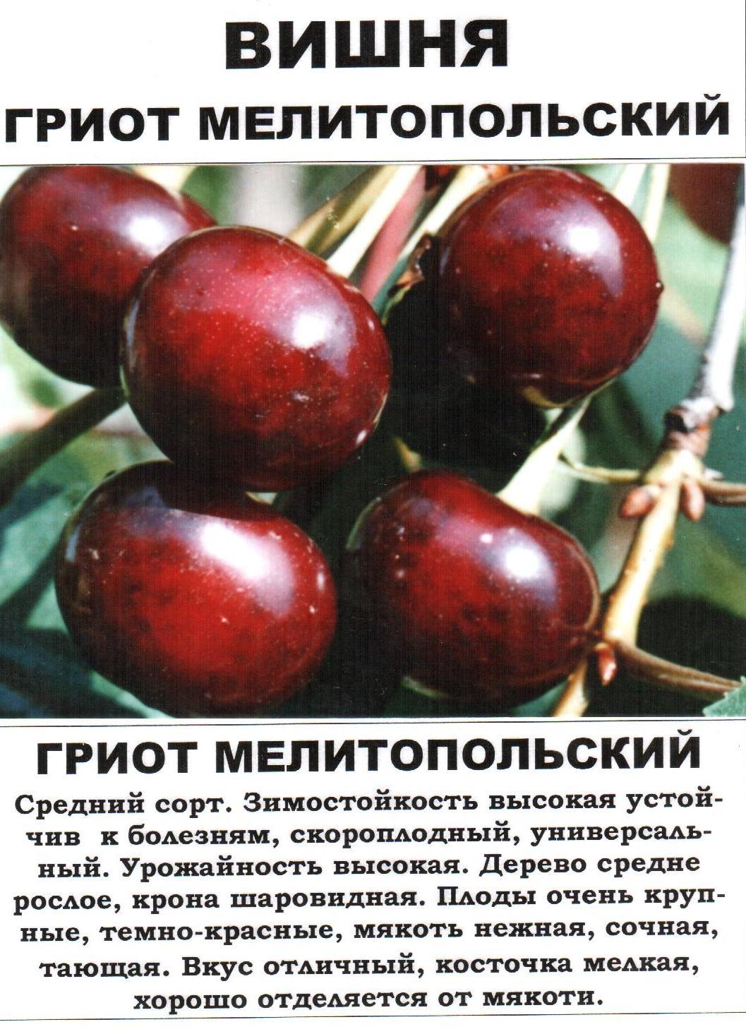 Сорта вишни — лучшие сорта для средней полосы россии, описание и особенности выращивания в саду (90 фото)