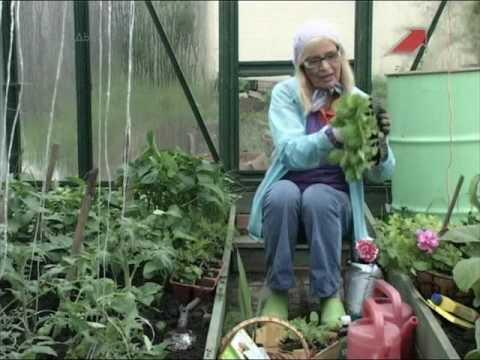 Рассада помидор плохо растет: как пасынковать томаты в теплице, посадка, выращивание и пикировка, советы октябрины ганичкиной