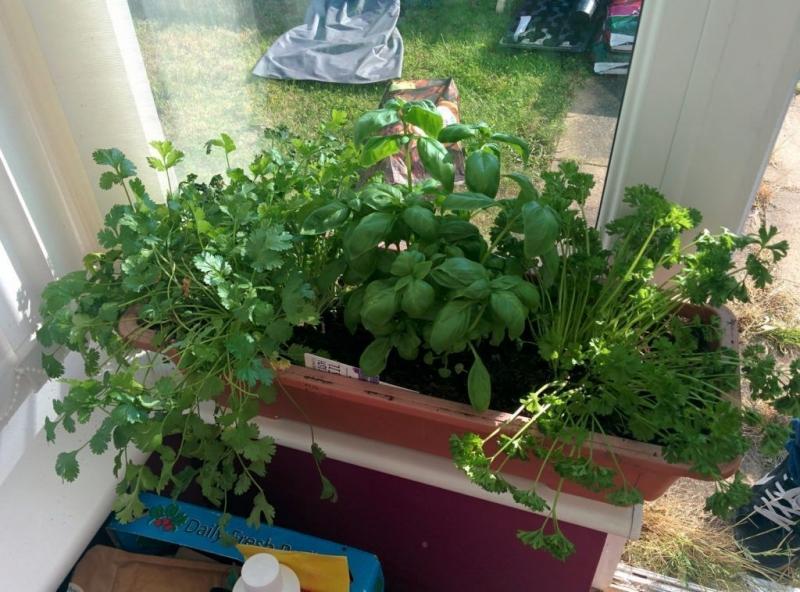 Выращивание базилика из семян в домашних условиях: посадка в горшок и уход, а также можно ли добиться результата, как выбрать место и какие сорта подходят? русский фермер