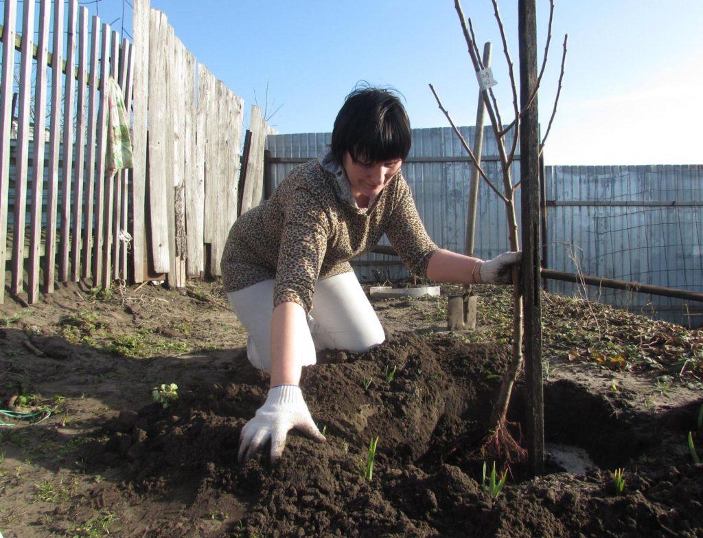 Персик в средней полосе россии: лучшие сорта, посадка, выращивание и уход