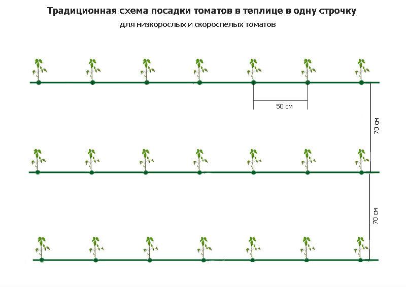 """Схема посадки огурцов в теплице: расстояние между рядами и в ряду - журнал """"совхозик"""""""