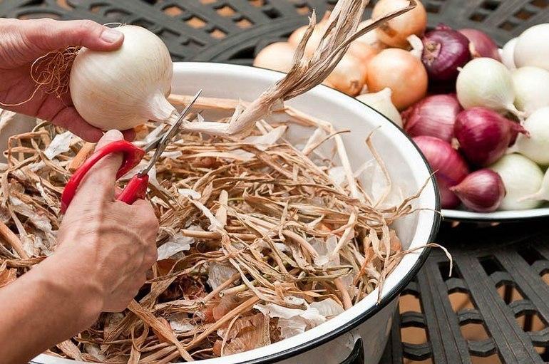 Правила обрезки и хранения лука в домашних условиях и как и когда нужно выкапывать овощ