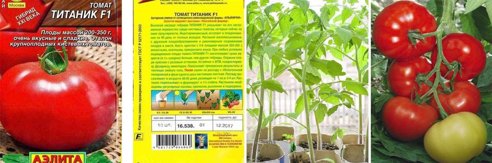 Томат кумир: описание сорта, фото помидоров и отзывы фермеров