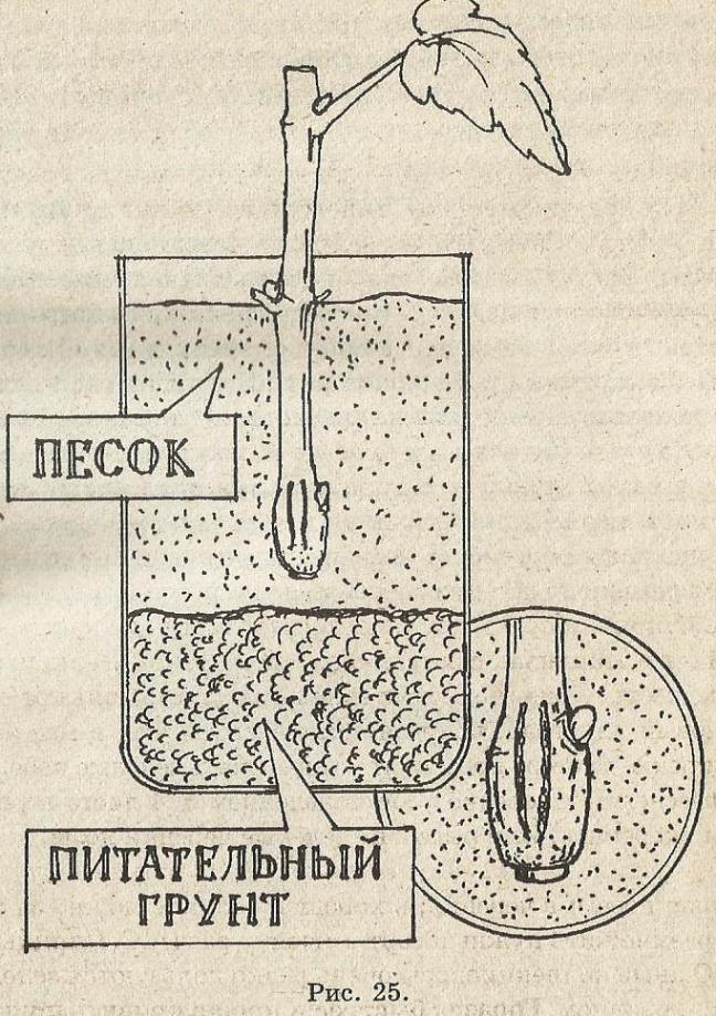 Как размножить виноград: черенками, прикапыванием лозы и другими основными способами, советы для начинающих