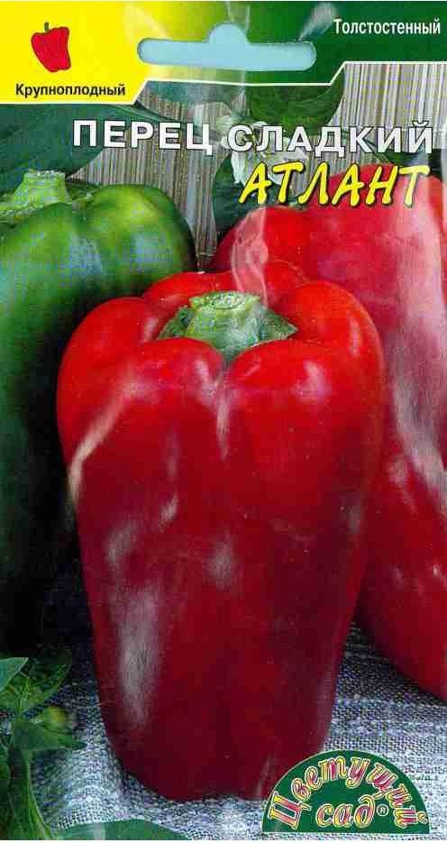 Характеристика и описание перца сорта атлант, выращивание и уход