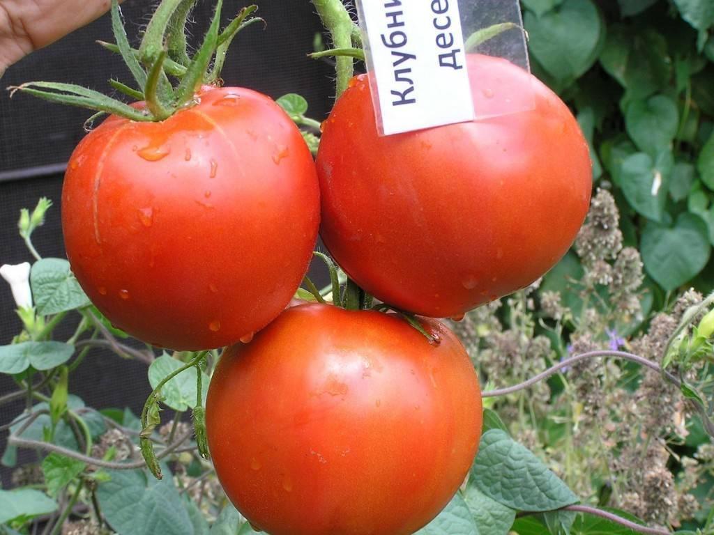 Характеристика и описание сорта томата клубничный десерт, отзывы, фото, урожайность