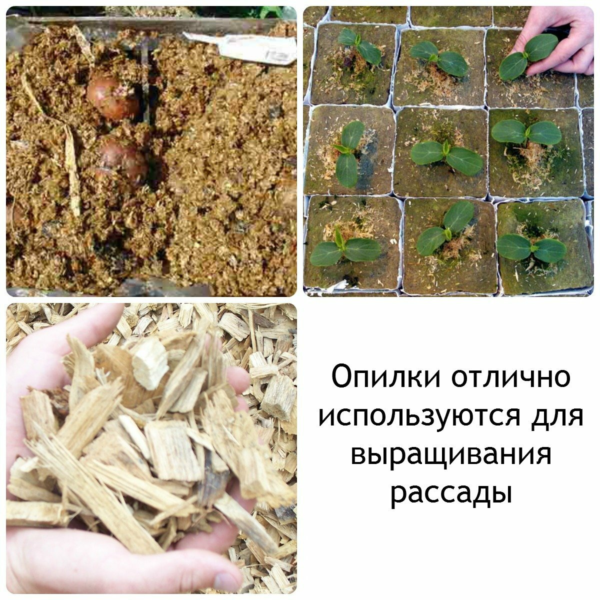 Посадка огурцов под пленку: как и когда сажать семенами и рассадой, видео