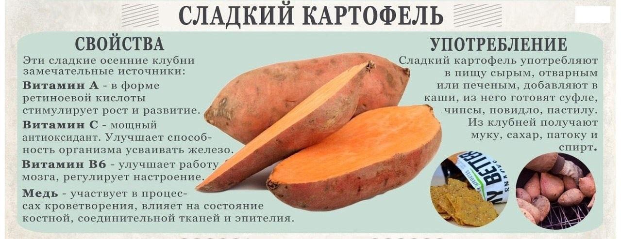 Картофель. польза и вред для организма