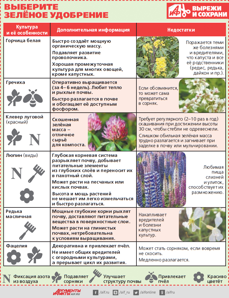 Растения-талисманы в саду-огороде привлекающие благополучие