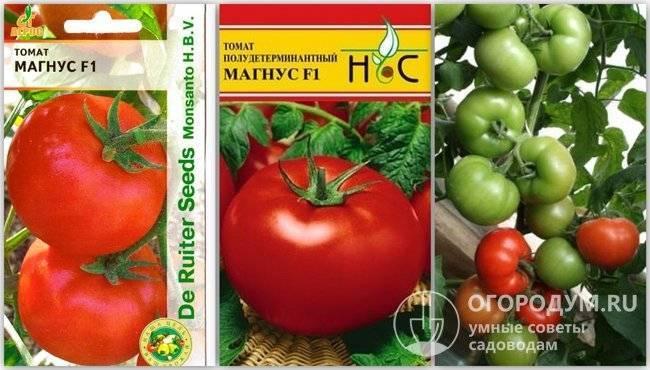 Белфорт f1 – сорт помидор, описание и разновидности