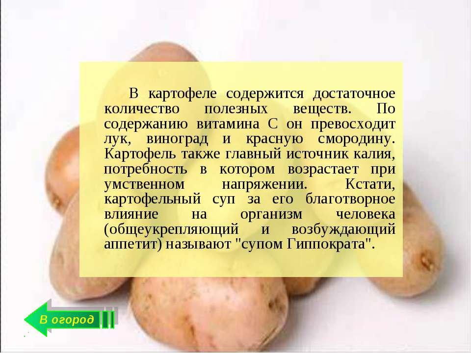 Полезные свойства картофеля для организма человека