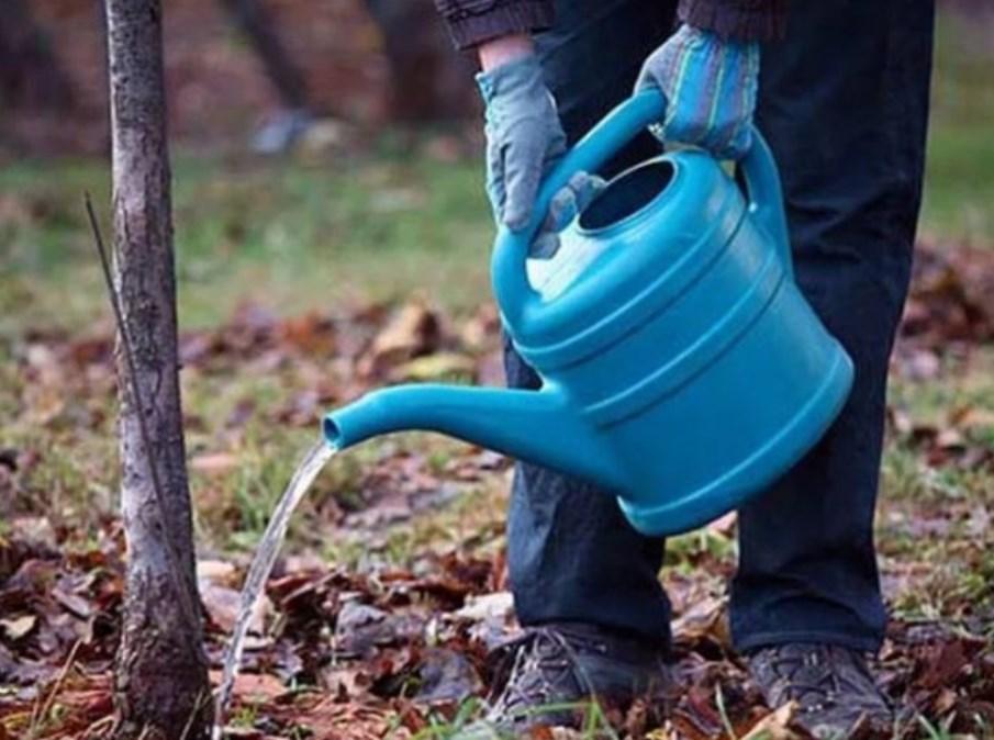 Подкормка сливы осенью, какие удобрения вносить?