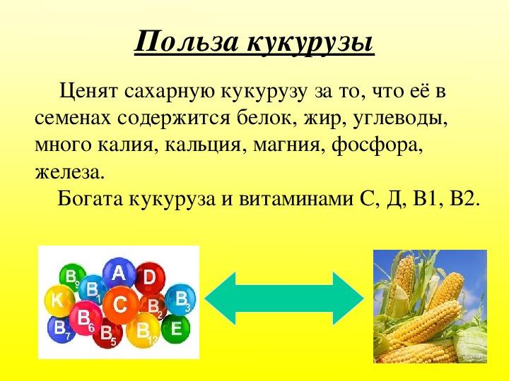 Чем полезна кукуруза: лечебные свойства и противопоказания, возможный вред для здоровья