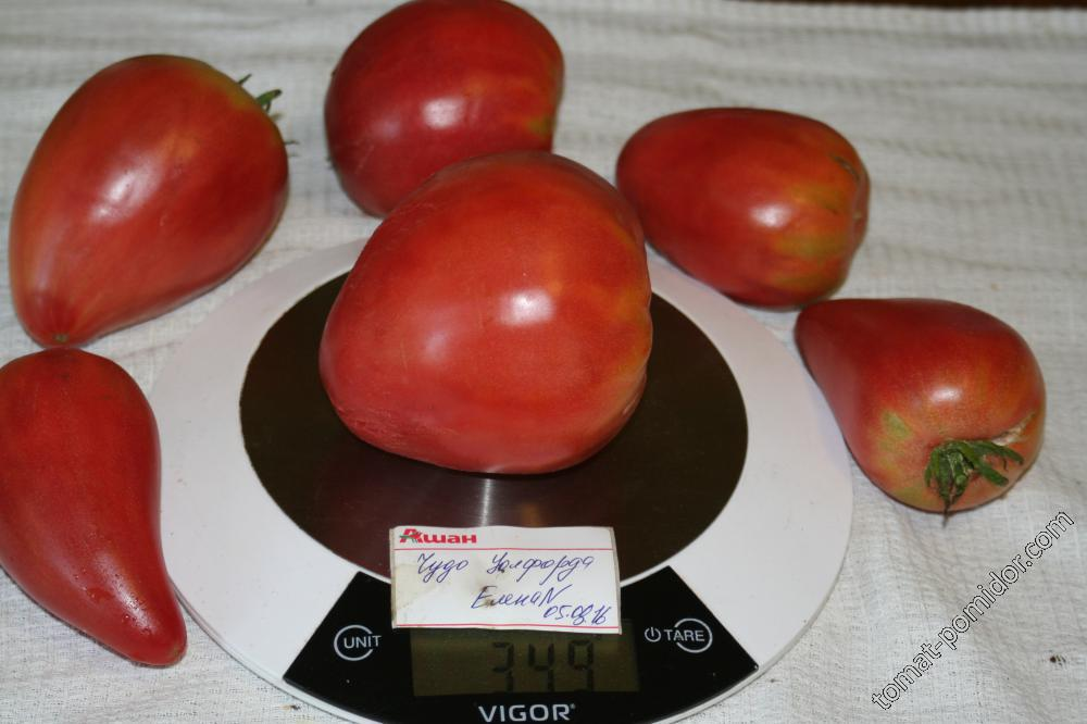 Характеристика и описание сорта томата чудо уолфорда, его урожайность