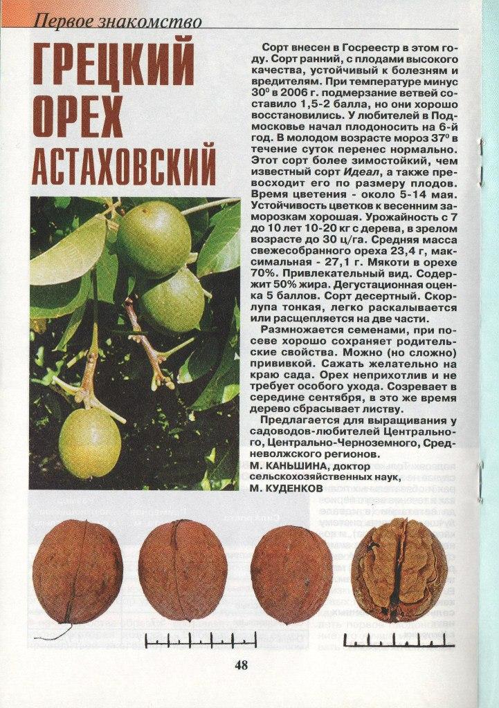 Как вырастить каштан из ореха: правила посадки и ухода - sadovnikam.ru
