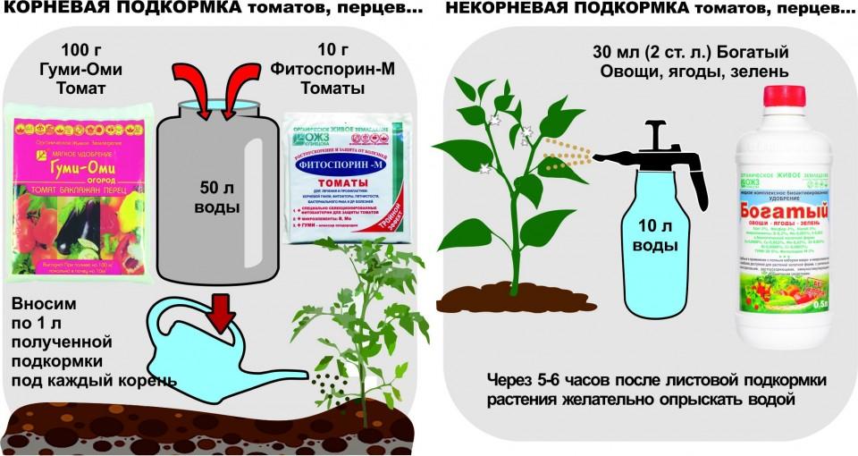 Чем и когда подкармливать арбузы в теплице и открытом грунте чтоб был хороший урожай