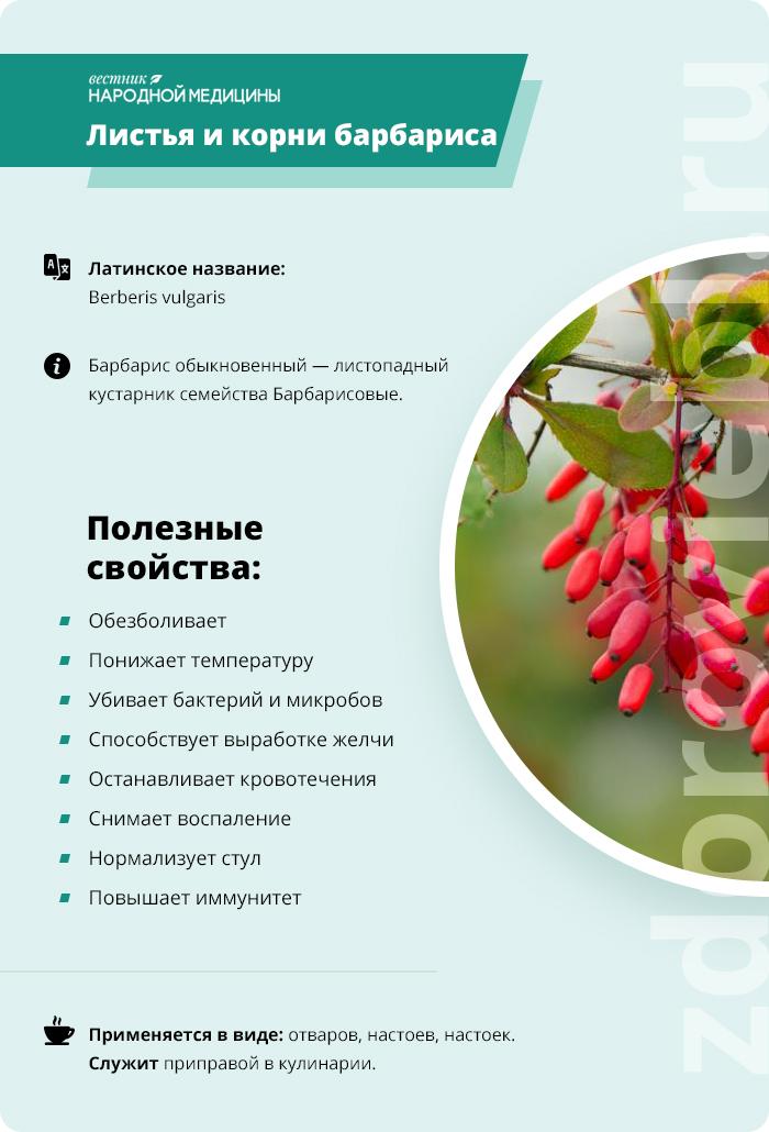 Барбарис – лекарственные свойства, народные рецепты