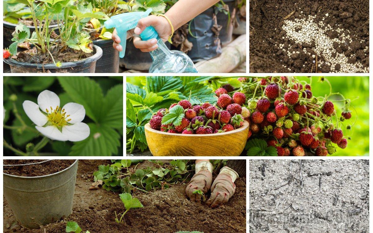 Легко ли вырастить черешню: основные правила агротехники | садоводство и огородничество