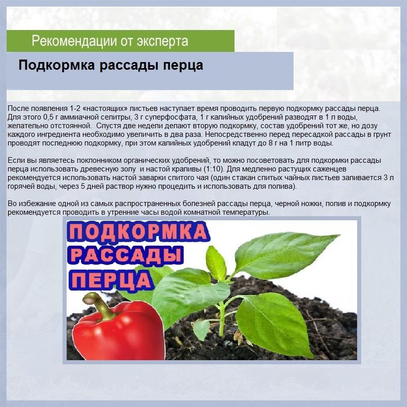 Подкормка рассады помидоров до, при и после пикировки: чем и когда питать в домашних условиях, какие первые удобрения для роста томатов, чтобы были толстенькие? русский фермер