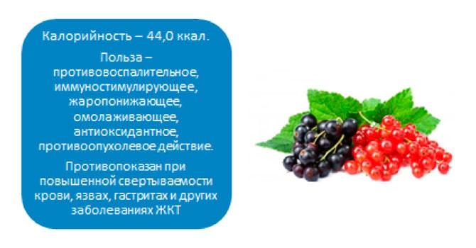 Красная смородина: польза и вред для здоровья, свойства, калорийность