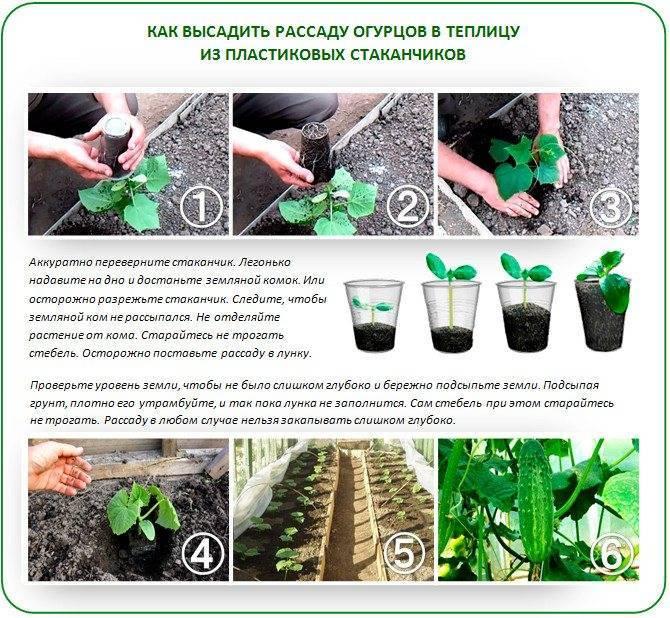 Как правильно и часто поливать капусту в открытом грунте: правила полива, нормы и сроки