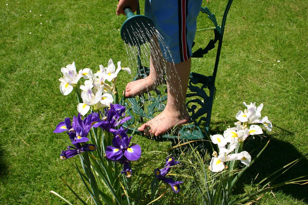 Рассаживаем ирисы весной: особенности проведения процедуры