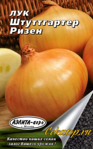 Неприхотливый сорт лука штутгартер ризен. характеристика и описание, агротехника выращивания, уход